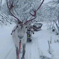 Merry Christmas Gif, Christmas Scenery, Winter Scenery, Winter Christmas, Funny Animal Videos, Funny Animals, Cute Animals, Winter Pictures, Christmas Pictures