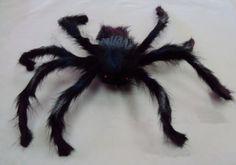 Halloween stor edderkopp, P30