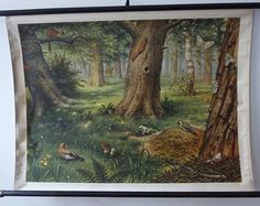 5 day delivery worldwide - Vintage Enchanted Forest Pull Down School Chart - Forest Print - Deer, Butterflies, Squirrels, Birds