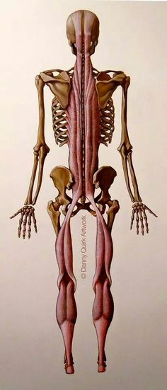Human Anatomy Drawing, Human Body Anatomy, Human Anatomy And Physiology, Anatomy Art, Anatomy Reference, Art Reference, Neck Muscle Anatomy, Anatomy Flashcards, Human Body Organs