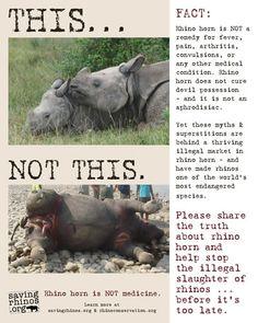 animal poaching persuasive essay