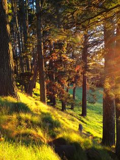 Beautiful Forested Bank. .uploaded by user