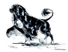 love her work of PWDS!!! portuguese water dog want to own an original!!!! LARGE portrait!