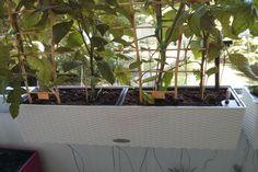 lechuza balconera - Recherche Google