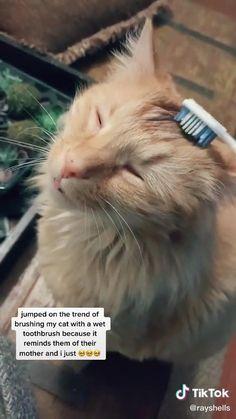 Cute Little Animals, Cute Funny Animals, Gato Gif, Video Chat, Cute Animal Videos, Cute Videos, Funny Cat Videos, Cute Stories, Funny Animal Memes