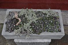 Ready-to-Go Pots - Hyland Garden Design Garden Troughs, Stone Bowl, Cast Stone, Ready To Go, Cacti And Succulents, Money Saving Tips, Hostess Gifts, How To Dry Basil, Garden Design