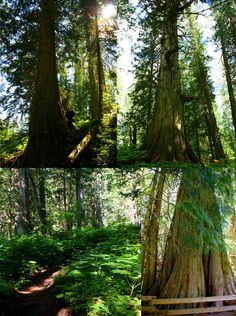 The Ancient Forest , in Northern British Columbia, Canada.