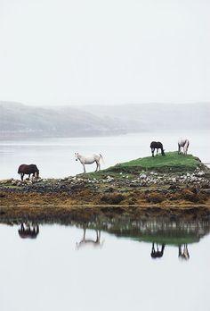 lacalaveracatrina:  Alen Mac Weeney - Horses grazing, Connemara, County Galway.