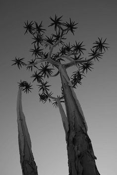 Richtersveld in South Africa | Stunning Places #Places