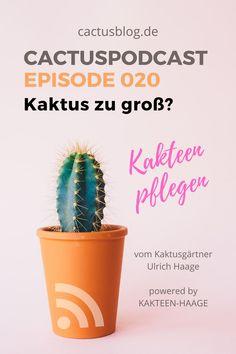 """Wenn der Kaktus vor dem Winter nicht mehr durch die Tür kommt - Kaktusgärtner Ulrich Haage beantwortet in seiner neuen Podcastfolge Hörerfragen rund um das Thema """"Umgang mit großen Kakteen im Winter."""" #HaageLife #UlrichHaage #Podcast"""