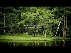 Sonidos de la Naturaleza - Los sonidos más relajantes! - YouTube