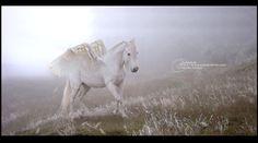 The last Pegasus by MLalalalou