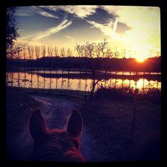 coucher de soleil aux Chevaux du Layon à Chaudefonds Sur Layon : prairies inondées