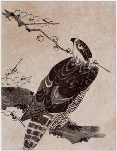 Faucon sur une branche de prunier (ume ni taka) Utamaro Kitagawa | musée Guimet - musée national des Arts asiatiques