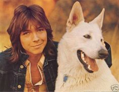 David Cassidy and his german shepherd. (Love the dog)