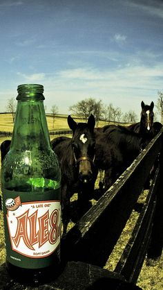 horses and Ale-8-One