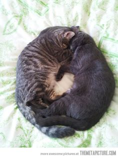 Circle of Cats