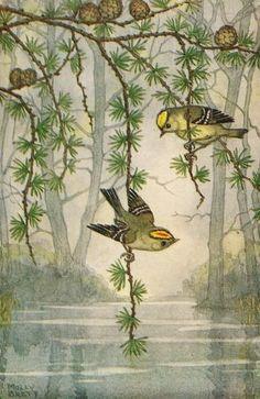 Illustration by Molly Brett Vintage Birds, Vintage Art, Animal Painter, Bird Pictures, Bird Art, Beautiful Birds, Illustrations Posters, Vintage Illustrations, Illustrators