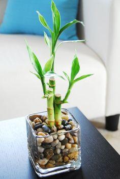 Water Plants Indoor, Indoor Bamboo, Aquatic Plants, Indoor Garden, Mason Jar Plants, Lucky Bamboo Plants, Garden Solutions, House Plants Decor, Deco Floral