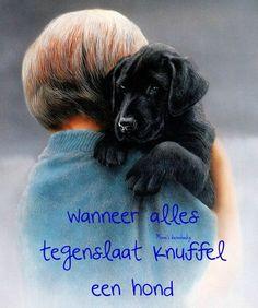 knuffel je hond