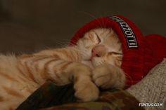 Cute Animals Sleeping