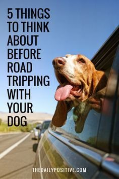 At this time of year, I can think of nothing better than jumping in the car with my dog and hitting the road for a weekend road trip. If like me, this idea fills you with joy, there are a few things you need to think about before loading up the car.