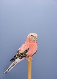 """The Incomplete Dictionary of Show Birds"" series by photographer Luke Stephenson"