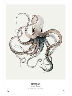 """Octopus Vulgaris"" print by Maaike Koster of My Deer Art Shop."