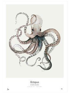 """""""Octopus Vulgaris"""" print by Maaike Koster of My Deer Art Shop."""