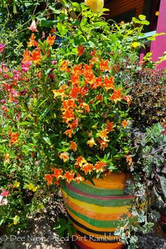 Keeyla Meadows garden - Red Dirt Ramblings®