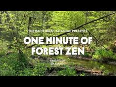 One Minute of Forest Zen – Port Jervis - YouTube Port Jervis, Lost In The Woods, Delaware River, Take A Deep Breath, Zen, Youtube, Youtubers, Meditation