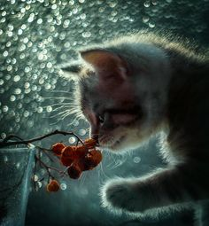 35PHOTO - Лилия - Лунный кот