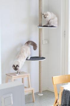 eilen tein: KIIPEILYPUU I Ikea Stolmen DIY Cat Tree
