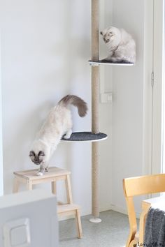 Diy Cat Tree With Ikea Stolmen Pole Pinteres