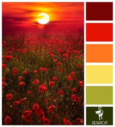 Poppy Sunset: Red, Burgundy, Green, Yellow - Colour Inspiration Pallet