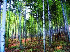 Birch Trees  print by ImagineStudio on Etsy, $24.00