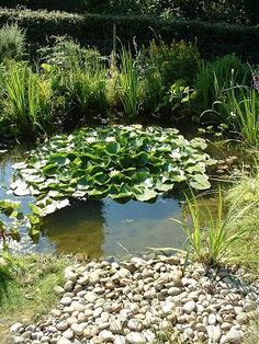 Kategils Pond: A Wildlife Pond With Smooth Pebble Beach, Designed And Built With Wildlife In Mind