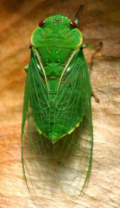 Words of Wisdom: My healing journey with Cicada!