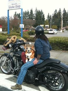 Corgi along for a ride with Doggles eye protection!