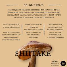 Shiitake Benefits, mushrooms, herbal medicine, apothecary Growing Mushrooms, Wild Mushrooms, Stuffed Mushrooms, Natural Home Remedies, Herbal Remedies, Health Remedies, Healing Herbs, Medicinal Plants, Natural Medicine