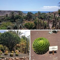 Oasis Park, Fuerteventura Canary Islands, Spain