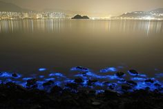 Bioluminescent Plankton Glow In Bloom On The Shores Of Hong Kong | Bored Panda