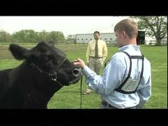 Sure Champ Showmanship Tips - Beef Showmanship Can't believe I'm pinning this....