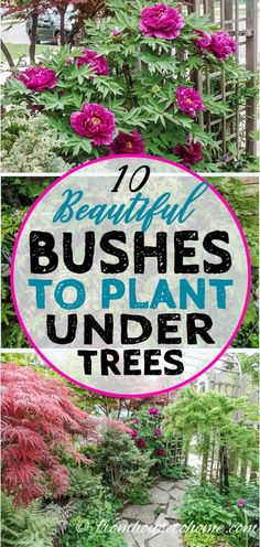 This list of bushes to plant under trees will give you some great ideas for a shady spot in your yard. Find out which shade loving shrubs with beautiful flowers will be perfect for your shade garden. #fromhousetohome #gardening #shadegarden #gardens #shad