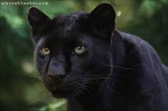 black panther - Google Search