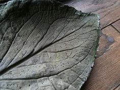 Cement Birdbath Tutorial : Made with Skunk Cabbage