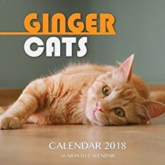 Ginger Cats Calendar 2018: 16 Month Calendar