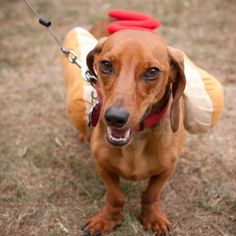 The Moore Humane Societys Cinco de Mayo Pooch Parade Fundraiser was such a hit last year that theyre bringing back the event and turning it into an annual fundraiser.