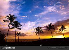 http://st3.depositphotos.com/1662755/13431/i/1600/depositphotos_134315888-stock-photo-hawaiian-palm-tree-sunset.jpg