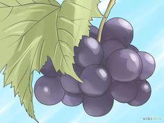 Immagine titolata Grow Grape Vines Step 1